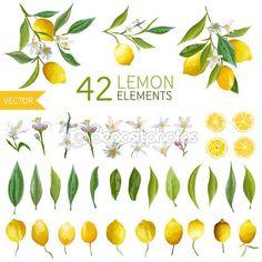 Limones vintage, flores y hojas. Bouquetes de limón. Estilo acuarela limones…