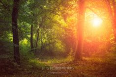 Forest Print Forest Photography Forest Wall by LittleBigAdventure