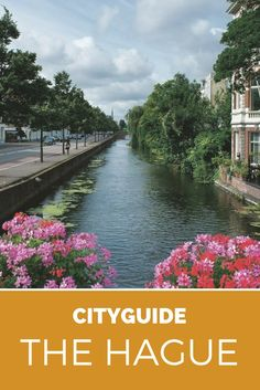 City guide The Hague. Visit The Hague in The Netherlands, explore museums, street art and the best restaurants in The Hague Funny Travel, Travel Humor, The Hague Netherlands, Tanks, Tank Tops, Hedges, Amsterdam, Dutch, Travel Destinations