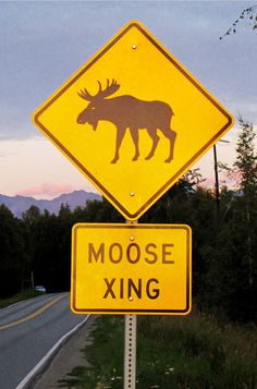 Moose Xing, Alaska. - need to get a picture of Jon standing by a sign like this when he gets stationed up there.