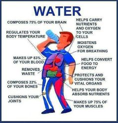 Water's importance to our body...