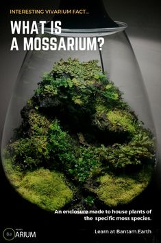 Garden Flowers - Annuals Or Perennials Mossarium: The Ultimate Guide and How To Build Moss Terreriums Build A Terrarium, Moss Terrarium, Water Terrarium, Best Terrarium Plants, Terrarium Wedding, Succulent Planters, Succulents Garden, Hanging Planters, Plant Growth