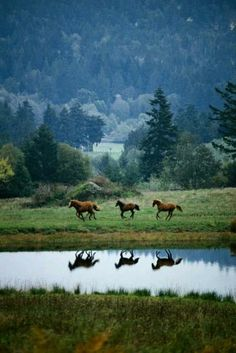 Horses running in a beautiful landscape.