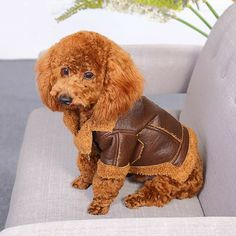 Warm Dog Clothes For Small Dog Windproof Winter Pet Dog Coat Jacket Padded Clothes Puppy Outfit Vest Yorkie Chihuahua Clothes. Chihuahua Clothes, Puppy Clothes, Animal Clothes, Perros Yorkshire Terrier, Fleece Dog Coat, Winter Leather Jackets, Puppy Costume, Dog Winter Coat, Pet Paws
