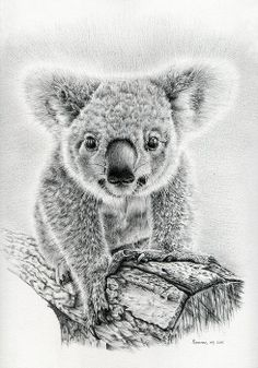 Pencil drawing of a koala. Go for more Koala Art to… Pencil Drawings Of Animals, Animal Sketches, Drawing Sketches, Koala Tattoo, Koala Craft, Koala Illustration, Baby Koala, Koala Bears, Image Deco