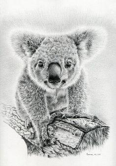 Koala Oxley Twinkles. Heidi Vormer. Fine Art America