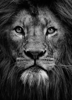 Image result for heart of a lion