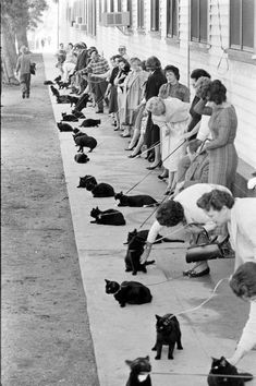 Black cat open casting call for the 1961 Edgar Allan Poe film, Tales of Terror. The kitties look so confused!