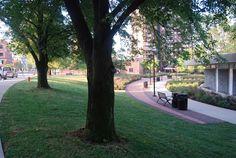 Bicentennial Park & Scioto Mile in Downtown Columbus, OH Bicentennial Park, Columbus Ohio, Sidewalk, Landscape, Plants, Sidewalks, Plant, Landscaping, Pavement