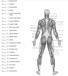 Human Anatomy Chart - Pictures Of Human Anatomy Body