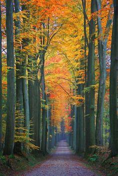 Walk on a Autumn Day