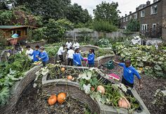 Over four years pupils at Christ Church primary school have transformed an abandoned allotment into this thriving vegetable garden. Read more about their project and others in the Community Project series on Guardian Live Better Photograph: David Levene Allotment Gardening, Primary School, Vegetable Garden, Abandoned, Christ, Photograph, Allotments, David, Community