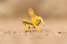 Photo Dance of the desert by Yazeed Alsahli on 500px