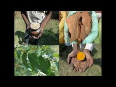 Medicinal Rice P5J Formulations for Aeschynomene Excess: Pankaj Oudhias...
