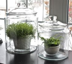Make Terrariums
