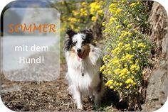 10 Tipps für einen guten Sommer mit dem Hund Dogs, Animals, Doggies, Summer Recipes, Tips, Animales, Animaux, Animal, Pet Dogs