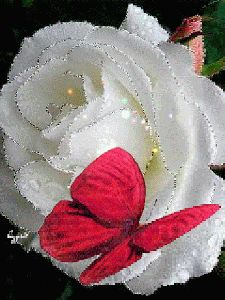 The perfect Rose Butterfly Animated GIF for your conversation. Discover and Share the best GIFs on Tenor. Flowers Gif, Beautiful Rose Flowers, Beautiful Gif, Beautiful Butterflies, Butterfly Gif, Butterfly Wallpaper, Images Gif, Gif Pictures, Gif Bonito