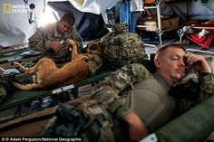 Grooming: Sergeant Bourgeois clips Oopey's toenails before a mission in Afghanistan. Handlers care for their dogs' every need, learning canine CPR as well as how to spot canine post-traumatic stress disorder, which afflicts some five per cent of deployed dogs