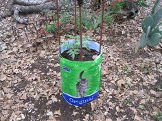 tomato planter from feed bag