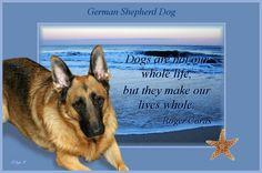 german shepherd quotes photo: German Shepherd dogs_in_our_lives.jpg