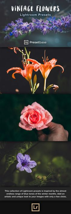 Vintage Flowers – 10 carefully crafted Lightroom Presets, specially developed for colorful flowers and plants or any other kind of vegetation.