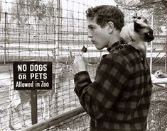 Paul Newman and cat disobeying the rules