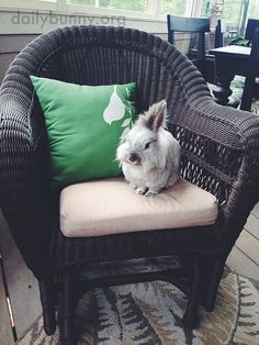 Bunny has claimed this chair - October 24, 2014
