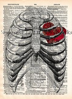 Anatomy Drawing Medical Steampunk clockwork heart, vintage anatomy ribcage, dictionary page book art print - - 1 - Anatomy Sketches, Anatomy Art, Art Sketches, Art Drawings, Anatomy Drawing, Heart Art, Art Plastique, Altered Books, Artwork Prints
