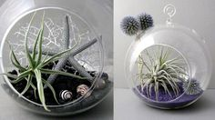 Looking for a gift for plant and design enthusiasts? Look no further than the Air Plant Terrarium.