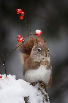 Red and berries by Andre Villeneuve on 500px
