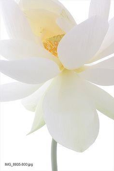 lotus ❤ﻸ•·˙❤•·˙ﻸ❤   ᘡℓvᘠ □☆□ ❉ღ // ✧彡●⊱❊⊰✦❁❀ ‿ ❀ ·✳︎· ☘‿SU JUN 25 2017‿☘✨ ✤ ॐ ♕ ♚ εїз⚜✧❦♥⭐♢❃ ♦♡ ❊☘нανє α ηι¢є ∂αу ☘❊ ღ 彡✦ ❁ ༺✿༻✨ ♥ ♫ ~*~ ♆❤ ☾♪♕✫ ❁ ✦●↠ ஜℓvஜ .❤ﻸ•·˙❤•·˙ﻸ❤