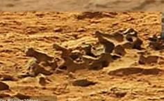 Fossil Spine In Mars Photo From NASA's Curiosity Rover Claims UFO Hunter    Fossilized Spine found in a Mars Curiosity Photo from SOL 109. This photo which has been circling the Mars Curiosity forums shows what appears to be a fossilized spine sticking out of the ground.