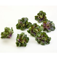 Kalettes™ Collection