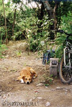 Yard Dog, Venustiano carranza, Tamaulipas, Mexico