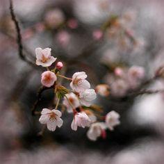 © Annie Japaud 2013 Floating in pink by Annie Japaud on Long Awaited, Spring Blossom, Annie, Beautiful Flowers, Flora, Garden, Plants, Pink, Garten