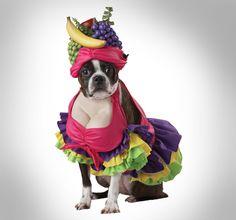 Cha Cha Cha Dog Costume