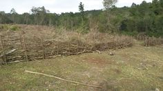 Using cleared alien black wattle for fencing. Fencing, Homesteading, Country Roads, Black, Fences, Black People