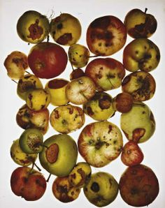 ROTTEN APPLE - Meaning: a single bad person or thing