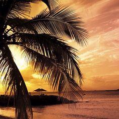 I love palm trees:)