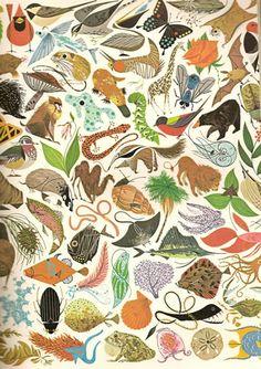 HOLY CATS! Charley Harper biology book find! « World of Julie