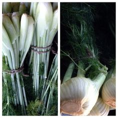 #fennel...nature's candy! #farmersmarketnyc #Manhattan Union Square Greenmarket