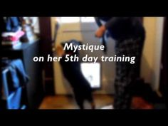 "Mystique Ringing the Bell (Potty Training). This is the 2nd version of the ""Mystique Ringing the Bell"" movie uploaded in YouTube."