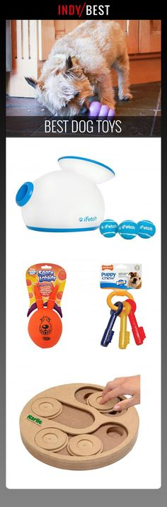 Our canine friends put dog toys to the test Small Puppies, Small Dogs, Best Dog Toys, Dog Baby, Your Dog, Terrier, Entertaining, Pets, Friends