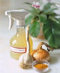 Спрей от тли и других вредителей.     В блендере смешайте одну очищенную луковицу и две дольки чеснока.  Добавьте одну ложку кайенского перца и три стакана воды. Дайте постоять ночь. Процедите и можно опрыскивать пораженное растение. Некоторые добавляют еще хозяйственное мыло, чтобы раствор держался на листьях. Срок годности раствора - 1 неделя.