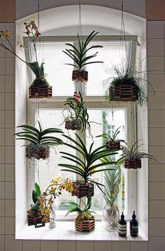 ღღ Love this little jungle in the window!!!  ~~< by AnneLiWest|BerlinDyson Design-Award im FvF Apartment