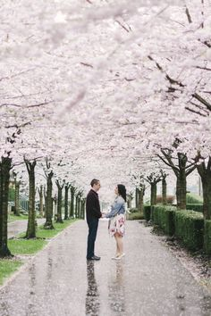 Yeah, it was raining, but this is just to beautiful to pass. Image by Wilson Lau | wilsonlau.ca #cherryblossoms #engagement #vancouver