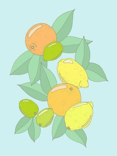 Citrus... Mini Poster
