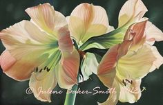JULENE BAKER-SMITH Amaryllis Fine Art Print