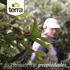 Si requieres supervisión y dirección de mayordomos para tus propiedades campestres (fincas, casas de campo, lotes) en #TerraPyJ te podemos apoyar.