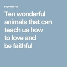 Ten wonderful animals that can teachus how tolove and befaithful